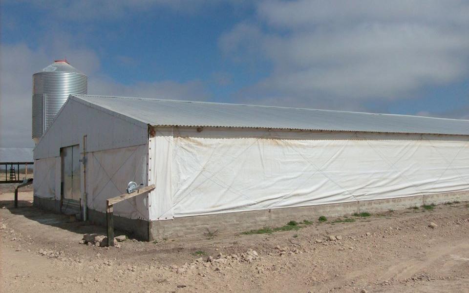 galpone avicultura 960 x 600